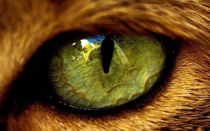 動物の目 animaliseye2