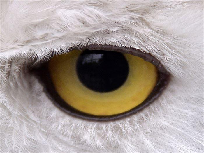 動物の目 animalseye
