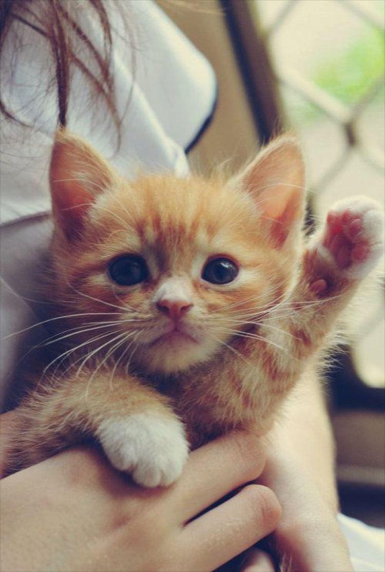 かわいい猫13