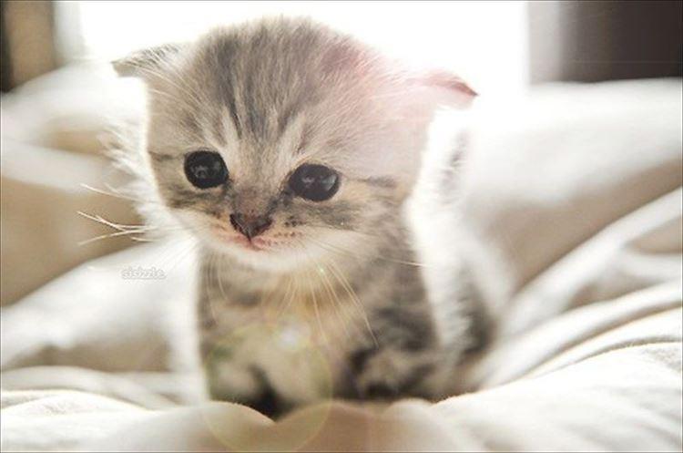 かわいい猫20