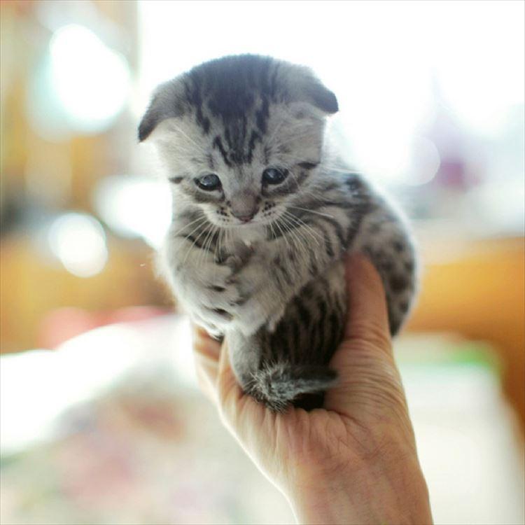 かわいい猫30