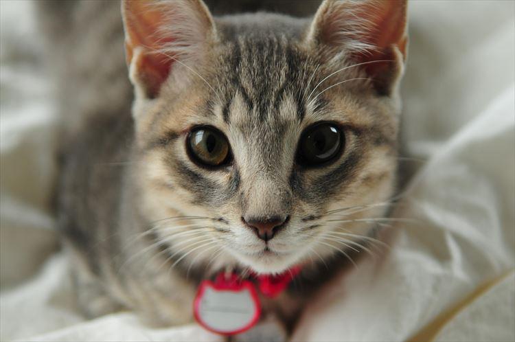 かわいい猫5
