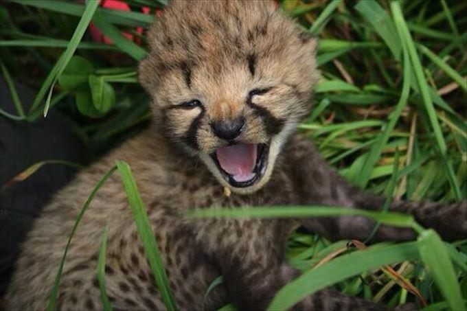 可愛い動物12