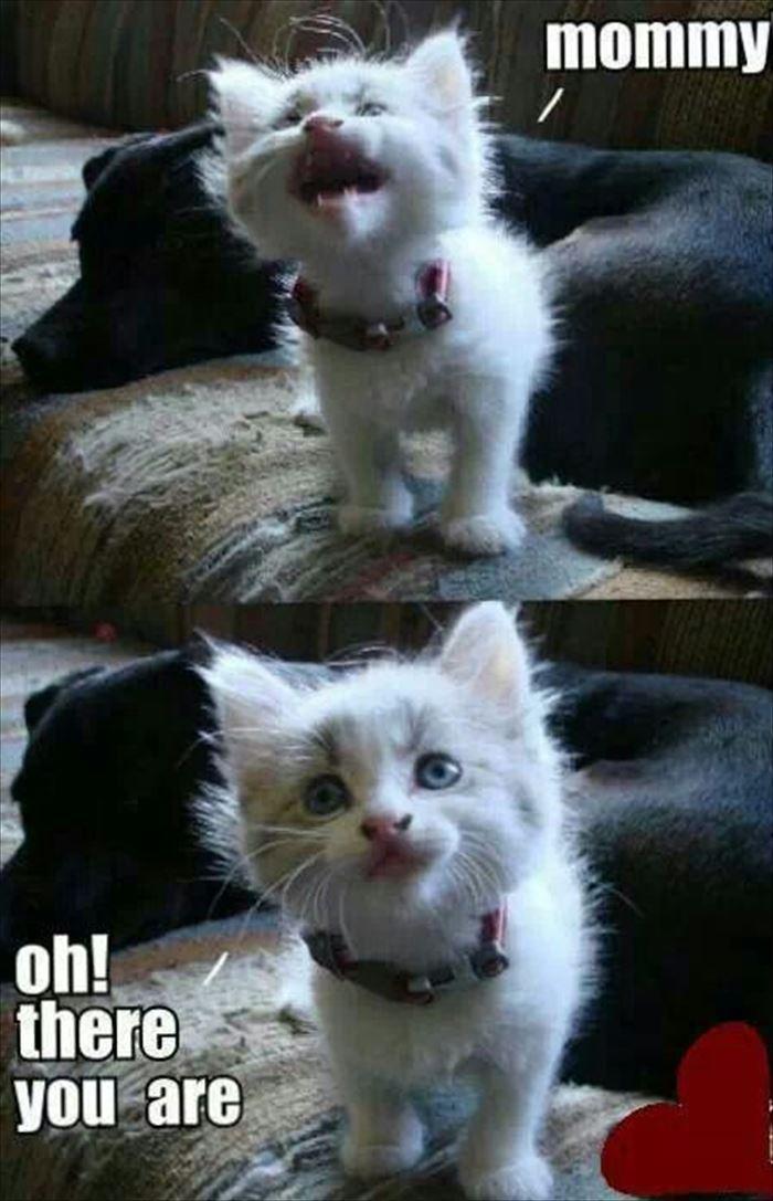 かわいい猫1