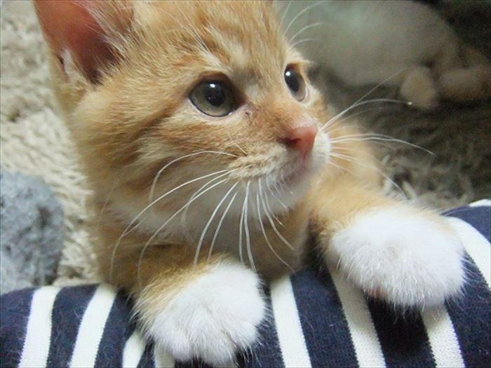 かわいい猫10