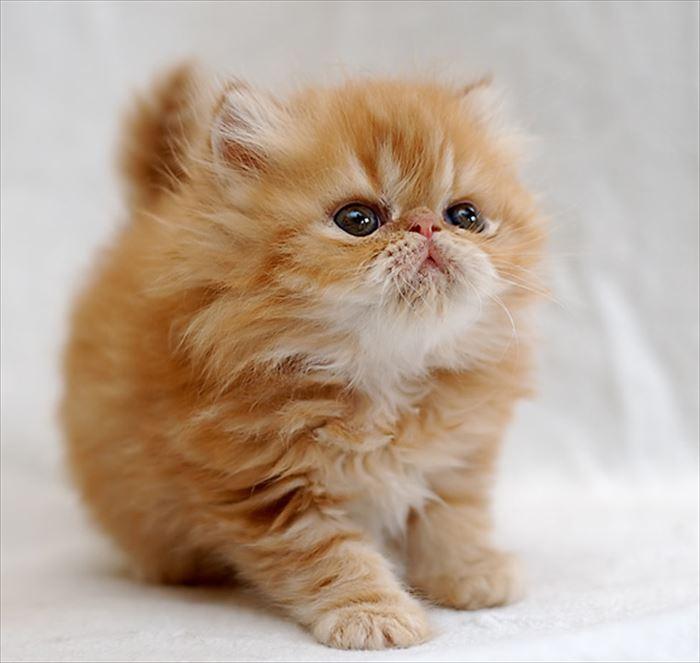 かわいい猫101