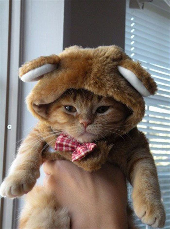 かわいい猫103