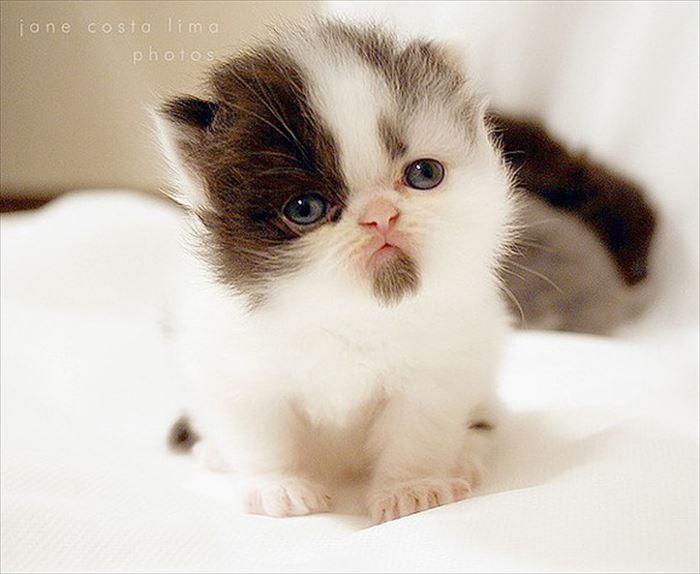 かわいい猫14