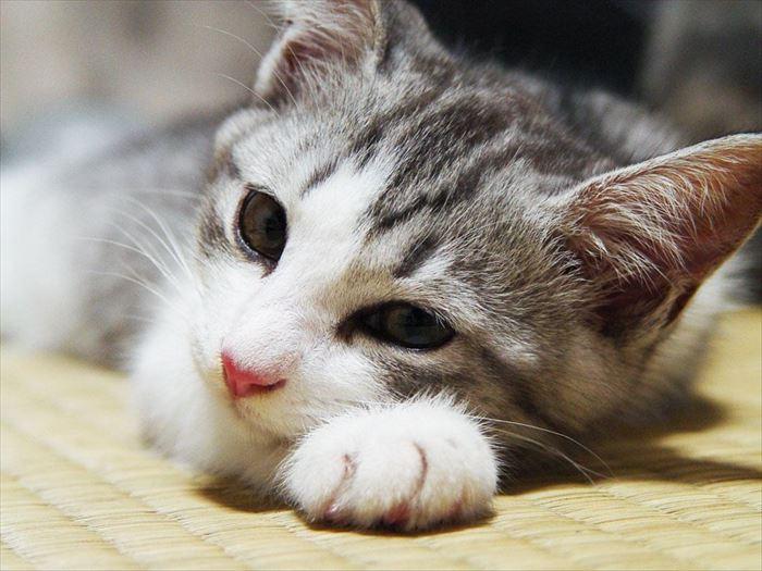かわいい猫16