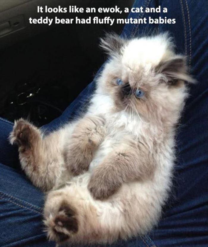 かわいい猫26