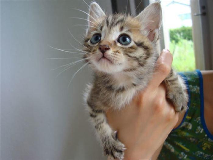 かわいい猫29