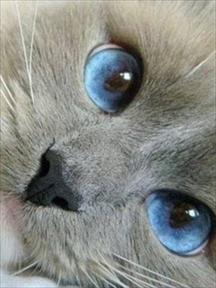 かわいい猫32