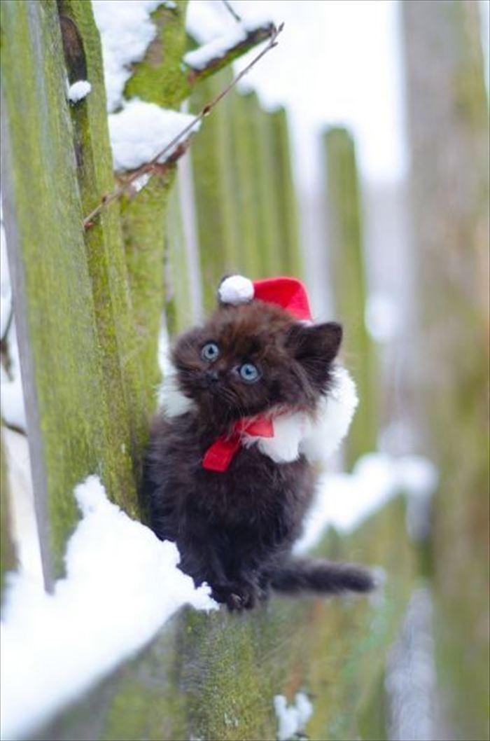かわいい猫33