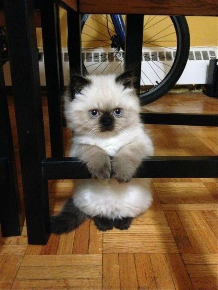 かわいい猫34