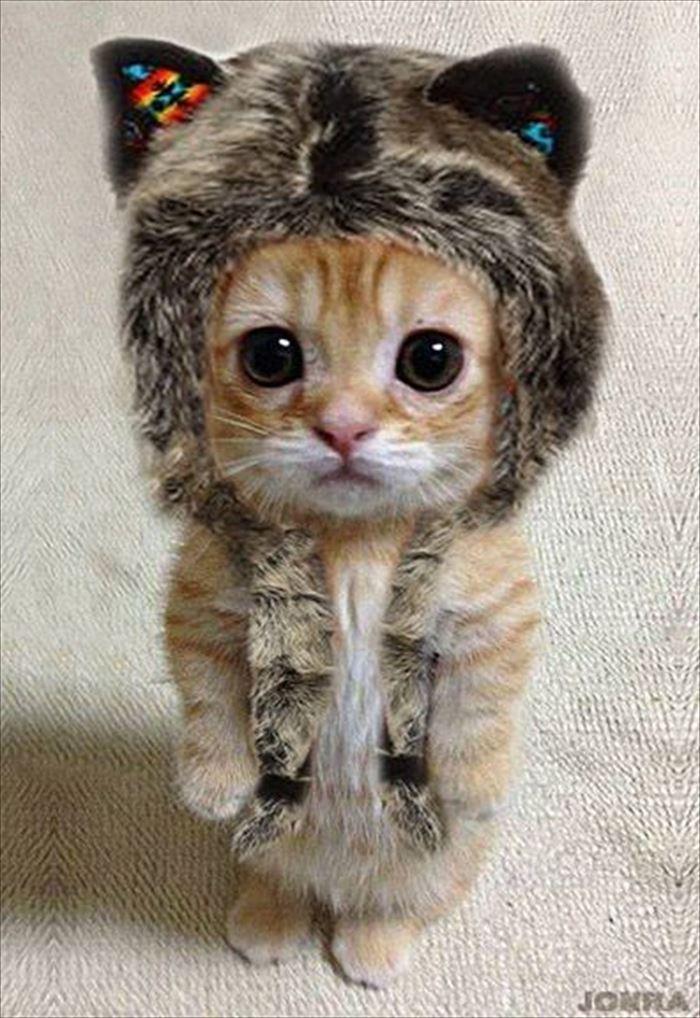 かわいい猫35