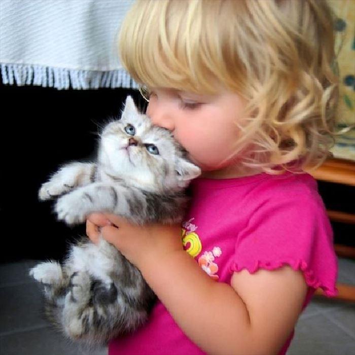 かわいい猫36