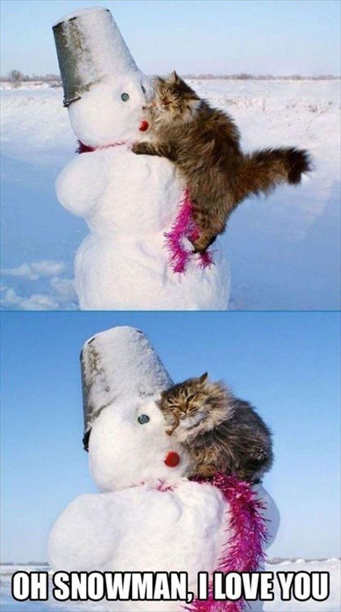 かわいい猫37