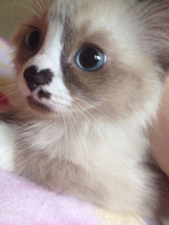 かわいい猫41