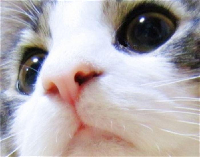 かわいい猫43