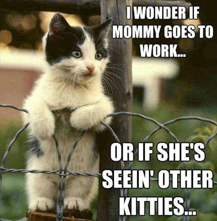 かわいい猫44