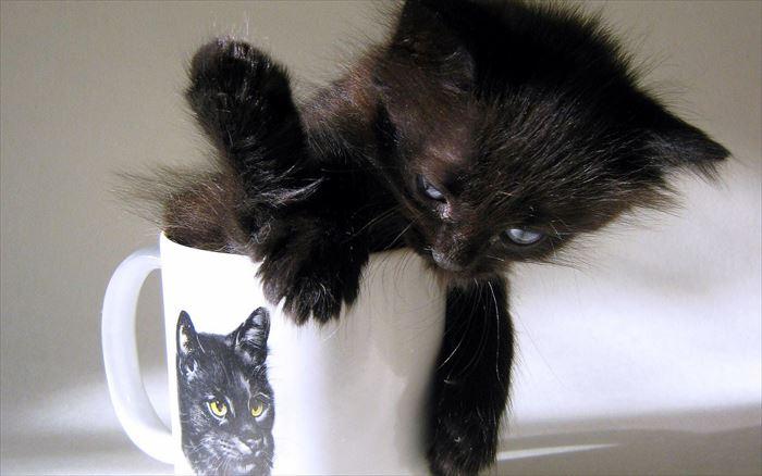 かわいい猫45
