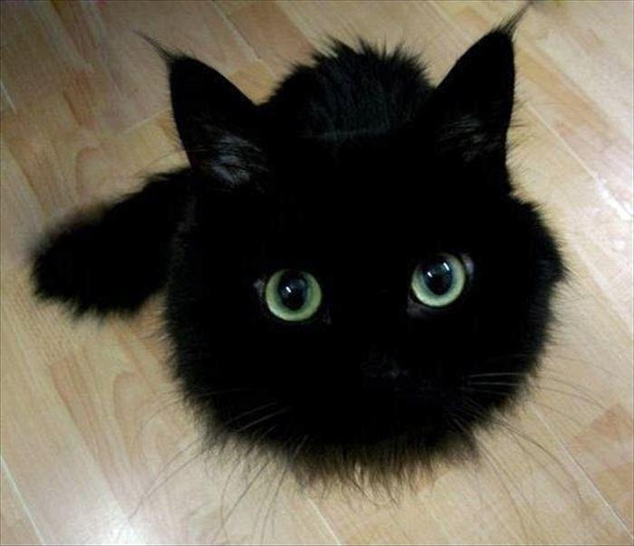 かわいい猫47