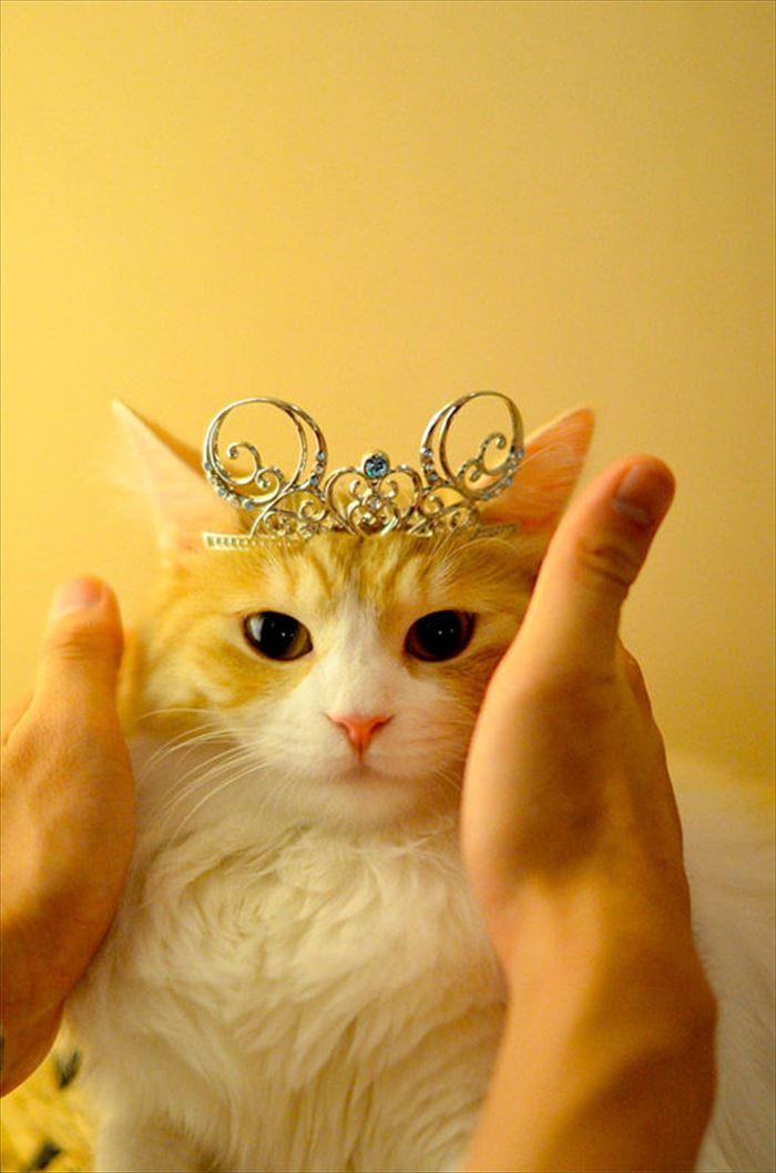 かわいい猫48