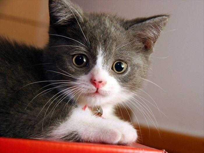 かわいい猫50