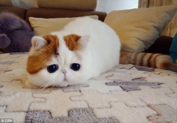 かわいい猫51