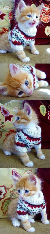 かわいい猫52