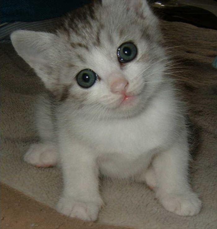 かわいい猫53
