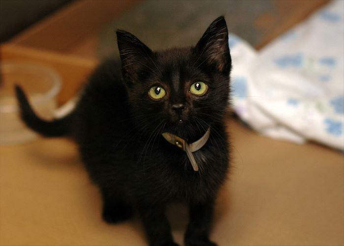 かわいい猫54