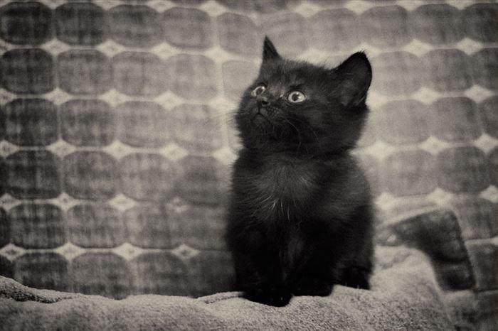 かわいい猫55