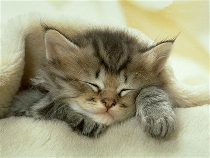 かわいい猫58