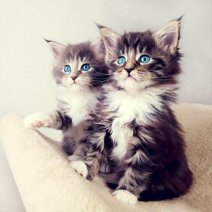 かわいい猫59