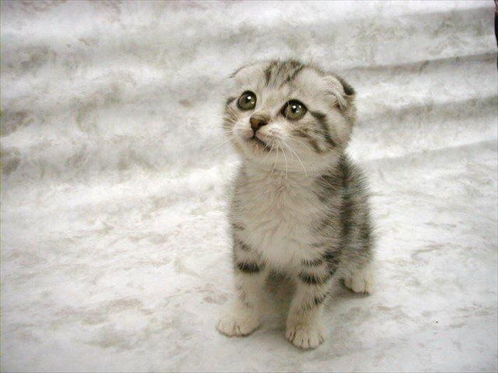 かわいい猫61