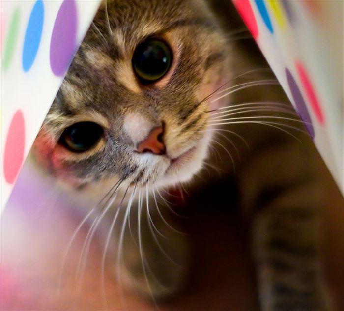 かわいい猫62