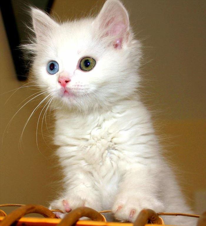 かわいい猫65