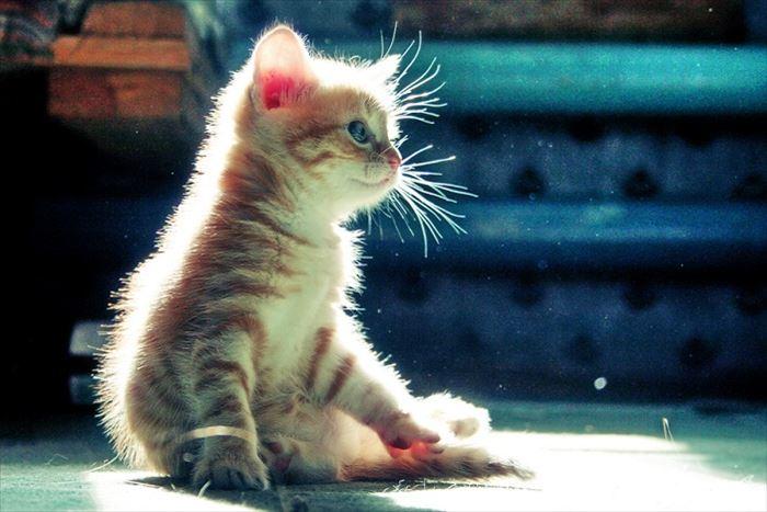 かわいい猫67
