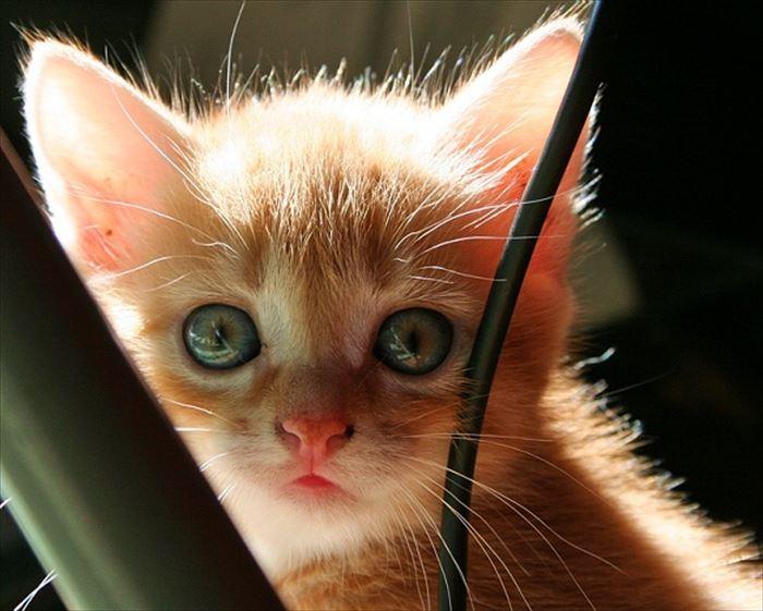 かわいい猫68