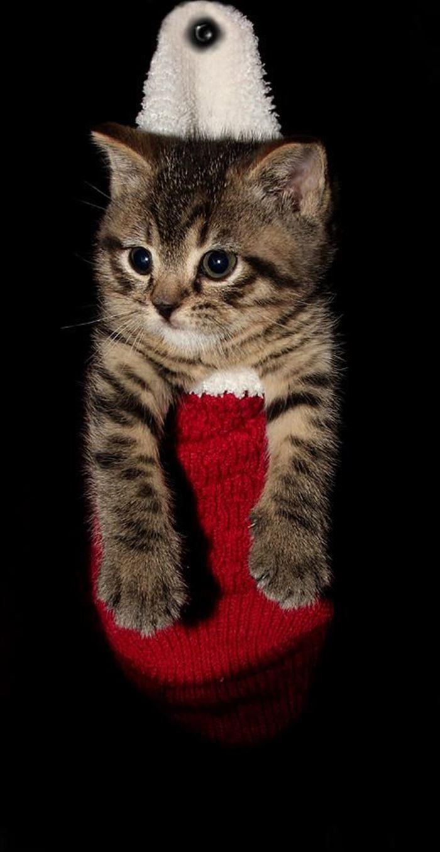 かわいい猫69
