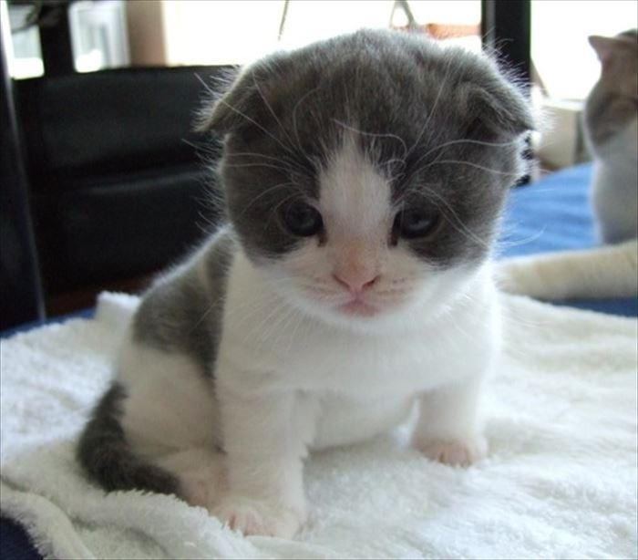 かわいい猫71