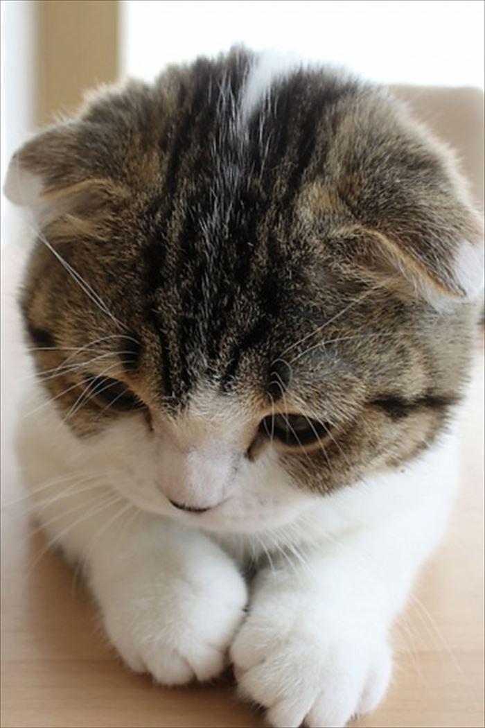 かわいい猫72