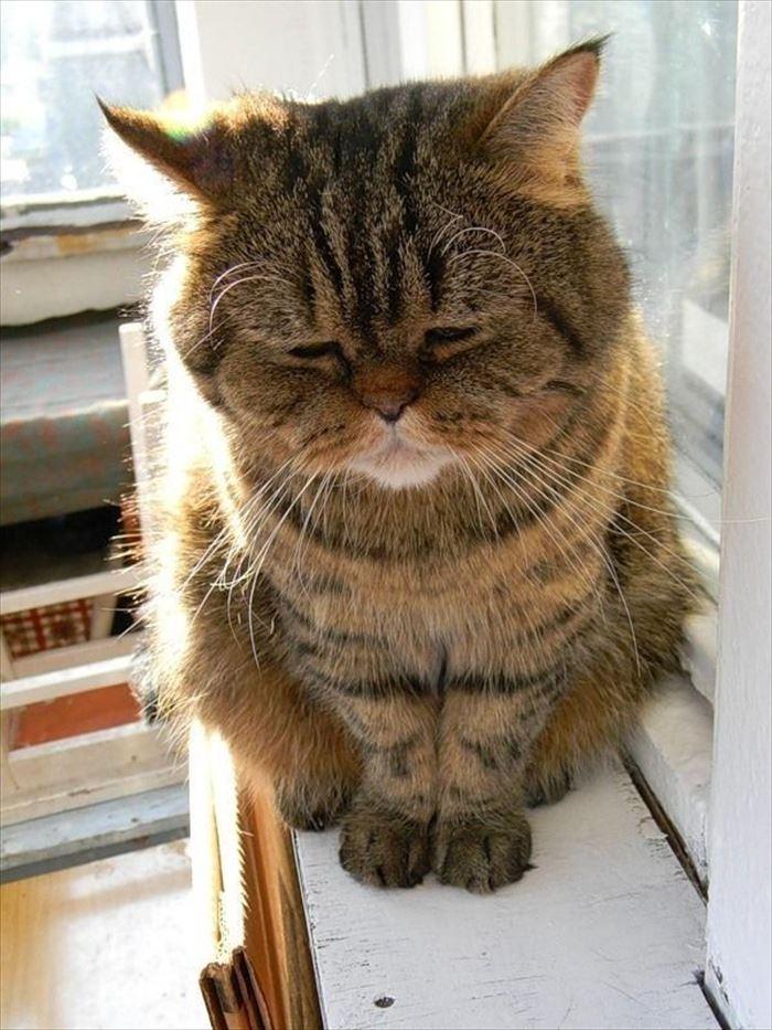 かわいい猫74