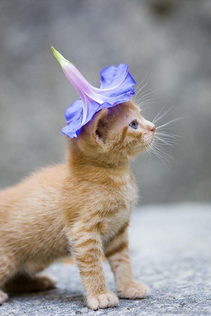 かわいい猫75