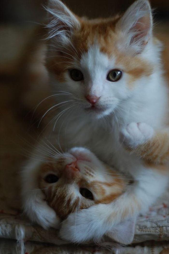 かわいい猫79