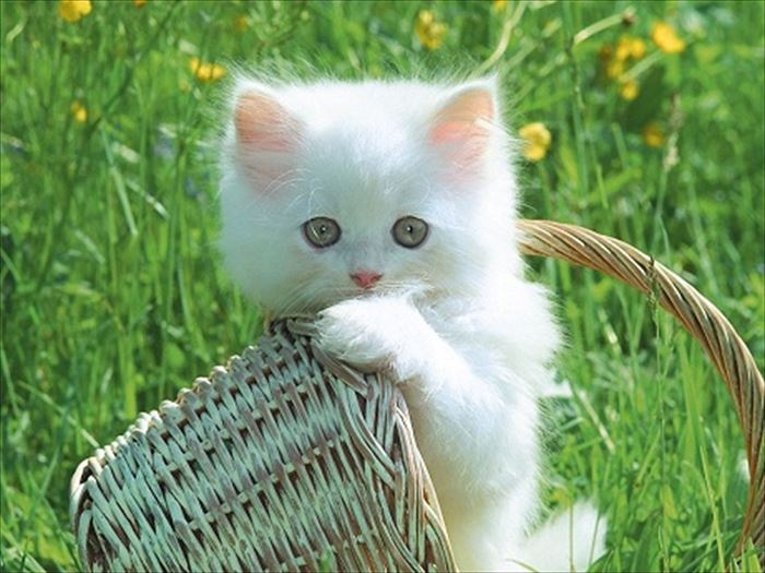 かわいい猫81