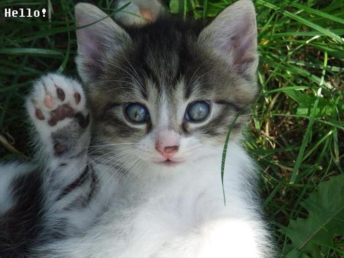 かわいい猫82