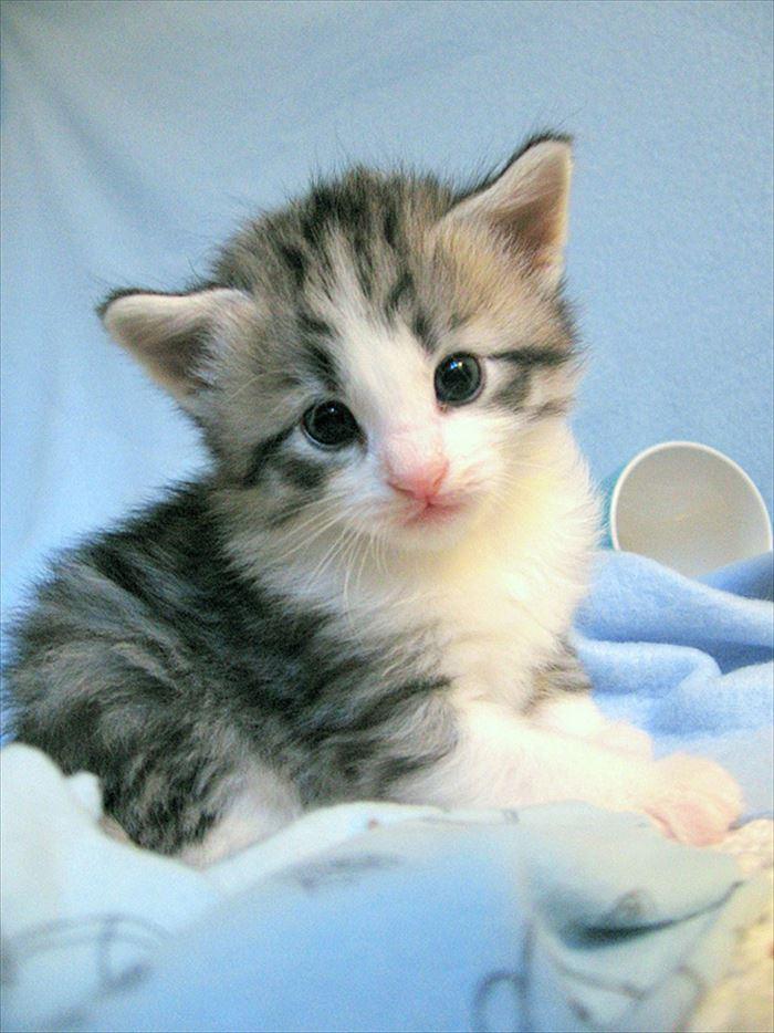 かわいい猫84
