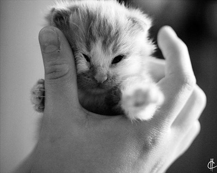 かわいい猫86